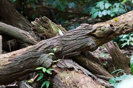 Fallen and decaying trees in the forest