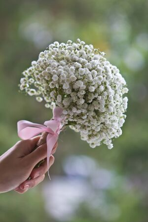 baby's: Ladys hand holding a bouquet of Babys breath flowers Stock Photo