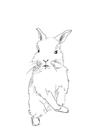hand drawing line art of small easter rabbit . Illustration