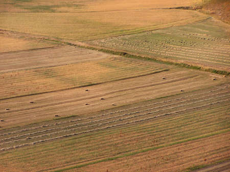 cropland: Airview of the field in summer