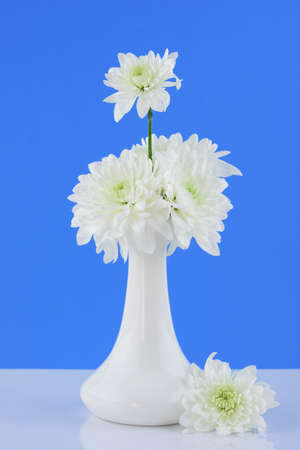 Chrysanthemums on a blue background with white vase 免版税图像