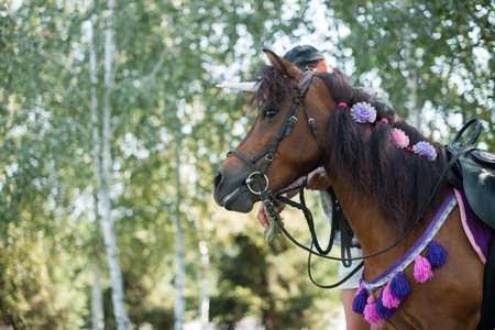 Beautiful young pony. With decor on the mane. On a summer day. Beautiful nature. 스톡 콘텐츠