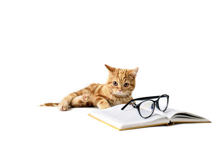 A small red-haired kitten next to a hardcover book, reading glasses, isolated on a white background. Place for text