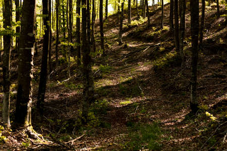 The Italian forest between Bologna and Florence, a really ancient trekking path called the Gods way