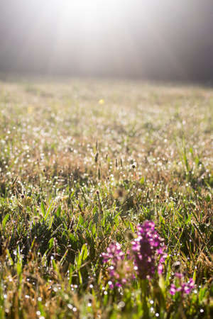 A mountain meadow by the first sun beam in the morning Imagens