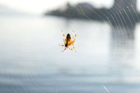 Little spider on its web in front of the lake
