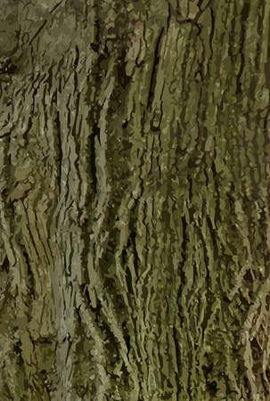 tree bark: Detailed tree bark background vector for design process Illustration
