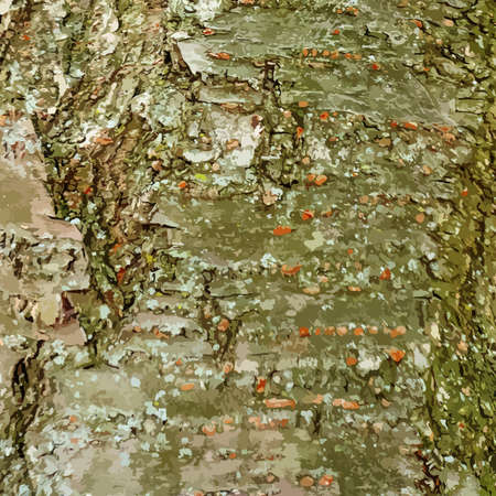 dettagli: Tree bark background with a lot of details vector Vettoriali