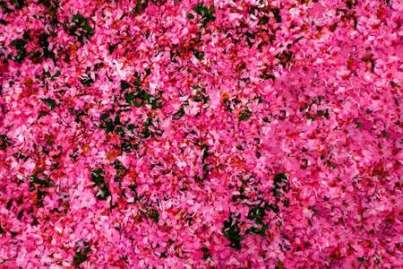 Petals of sakura on the ground background vector Illustration