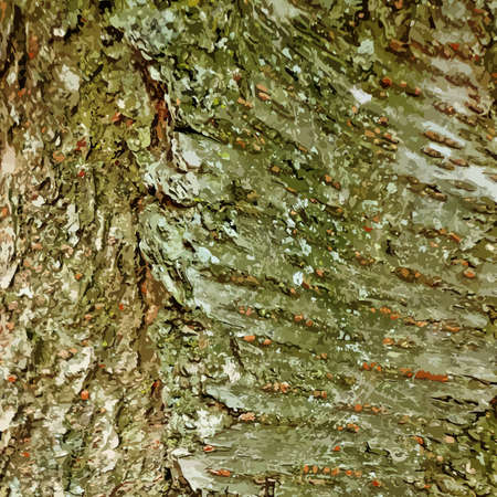 dettagli: Abstract vector tree bark background with a lot of details