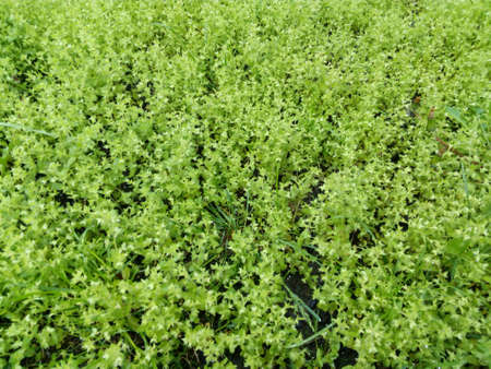 glades: Glade with a young green grass closeup Stock Photo