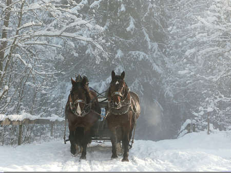 Sleigh ride in winter. The Alps, Germany.