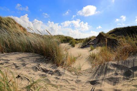 Dunes in Egmond aan Zee. North Sea, the Netherlands.