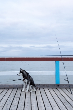 Fishing with friend, husky and a fishing rod photo