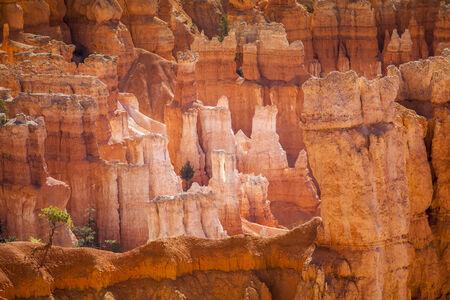 hoodoos: Amazing hoodoos in Bryce Canyon National Park in Utah, USA Stock Photo