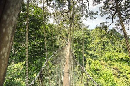 Canopy walkway in Kakum National Park, Accra Region, Ghana, West Africa Stok Fotoğraf