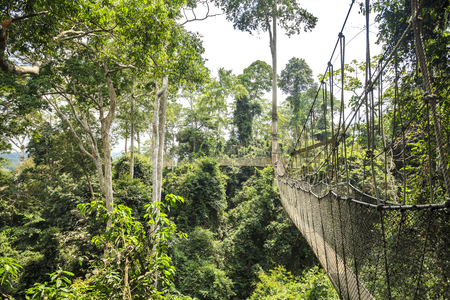 Canopy walkway in Kakum National Park, Accra Region, Ghana, West Africa Stok Fotoğraf - 36023382