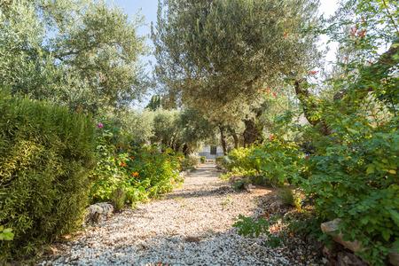 イスラエル、エルサレムのオリーブ山のゲッセマネの園庭 写真素材