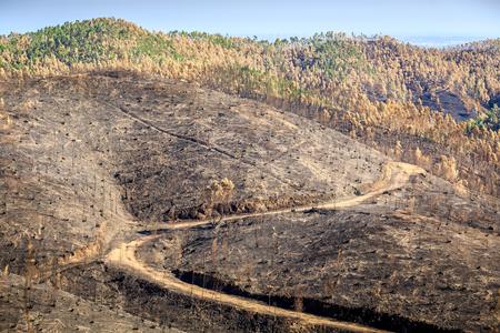 ポルトガル、アルガルヴェの山で焼け森林景観