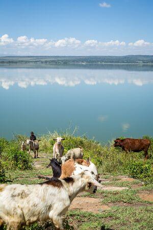 エルメンテイタ湖、ケニア、東ア...