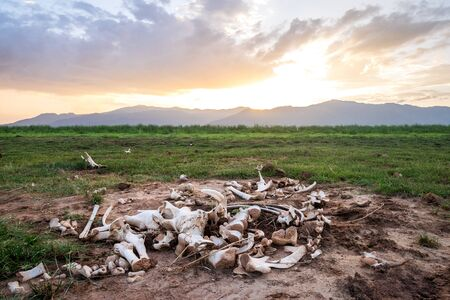 Big animal bones over Jipe Lake in Tsavo West, Kenya Stock Photo