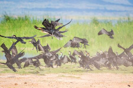 Spur winged birds in Tsavo West National Park, Kenya Stock Photo