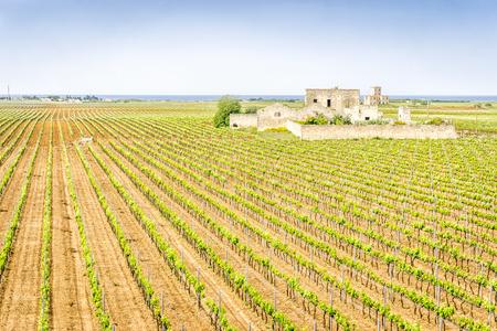 放棄されたブドウ園、プーリア、イタリアのワイナリーの家