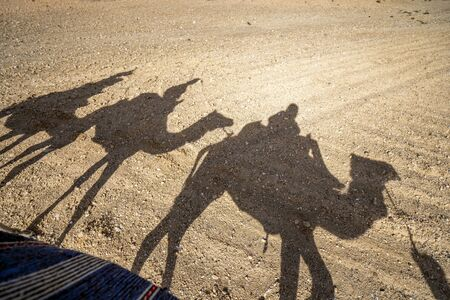 Shadows of dromedary camel caravan on the desert Agafay, Marrakech, Morocco