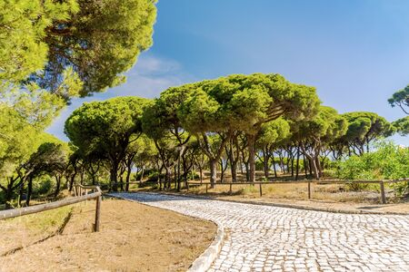 Paved path with wooden railings in beautiful southern pine tree forest, Quinta do Lago, Algarve, south Portugal Фото со стока