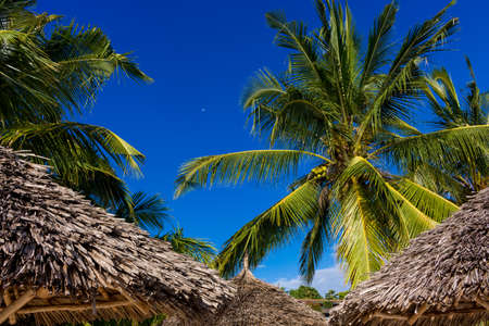 Coconut trees at Sansibar Zanzibar Dream Beach, Africa