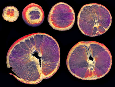 citrus aurantium: Slices of orange colored in alternating way on a black background. Stock Photo