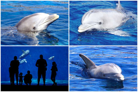aquarium visit: Dolphin and silhouette collage. Collage of four pictures with dolphins silhouette of a family in front of the dolphin tank.