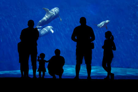 aquarium visit: Silhouette of a family watching dolphin. Foreground subject completely in the shade, a family of dolphins in the background.