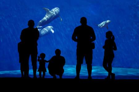 delfin: Sylwetka rodziny oglądanie delfinów. Pierwszy plan podlega całkowicie w cieniu, rodziny delfinów w tle. Zdjęcie Seryjne