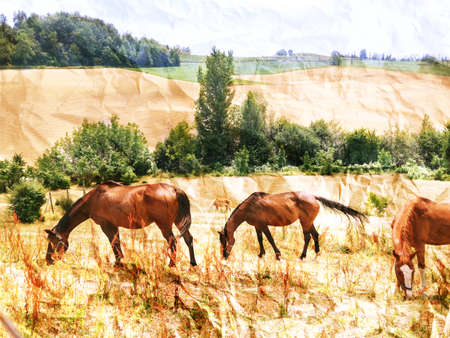 superimposed: Free horses in the country.Rural landscape with horses in the foreground and the background changes cultivated. Crumpled paper texture superimposed.