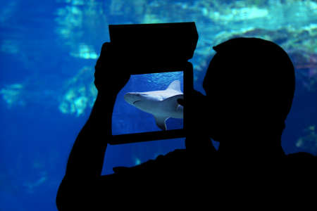 bull shark: Photographing a shark aquarium. Silhouette of a man photographing a shark aquarium with a tablet Stock Photo