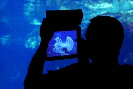 aquarium visit: Photographing a jellyfish aquarium. Silhouette of a man photographing a jellyfish aquarium with a tablet