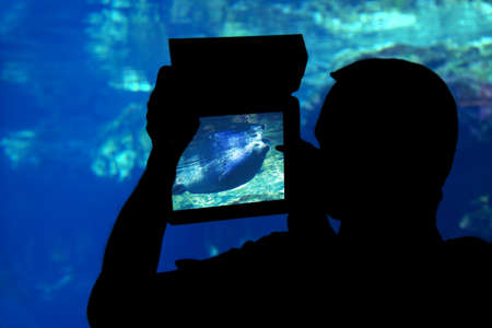 aquarium visit: Photographing a seal aquarium. Silhouette of a man shooting a seal with a tablet aquarium Stock Photo