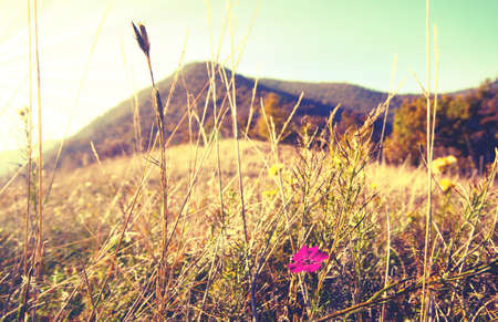 cross process: Lonely flower. Cross process. Mountain panorama with flower isolated. Cross process.