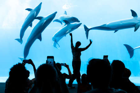 People watch the dolphins of the aquarium. Dolphin trainer makes a show at the Genoa aquarium.