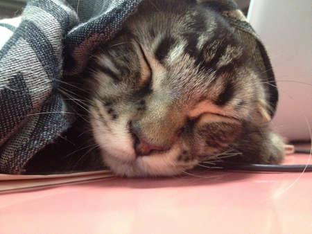 nochebuena: Dormir gatito