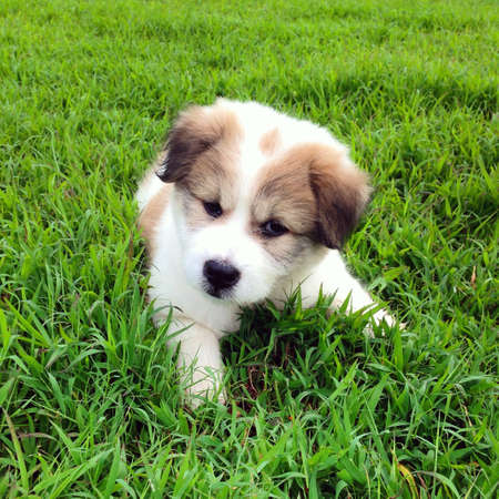 white dog: Cute puppy relaxing on grass