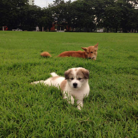 white dog: Dogs relaxing on grass