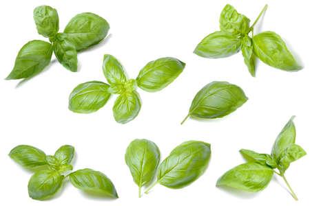 Fresh organic basil collection Stock fotó
