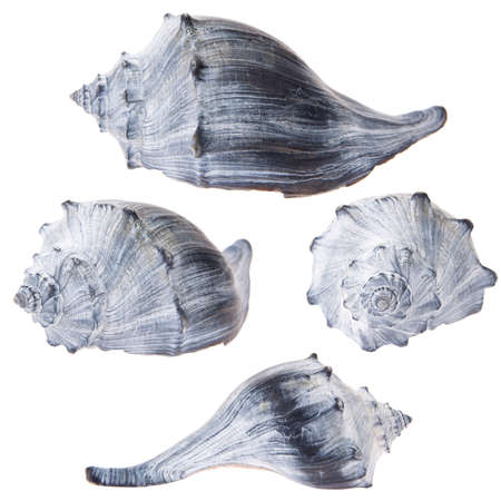Conch shell collection Stock Photo