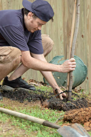Man planting a tree in the backyard