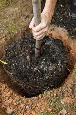 Hand planting tree Stock Photo