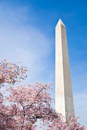 cerezos en flor: Flores de cerezo en el Monumento a Washington
