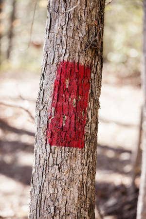 resplandor: Rutas incendio en un árbol en un parque