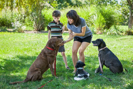animal behavior: Woman and child giving treats to dogs
